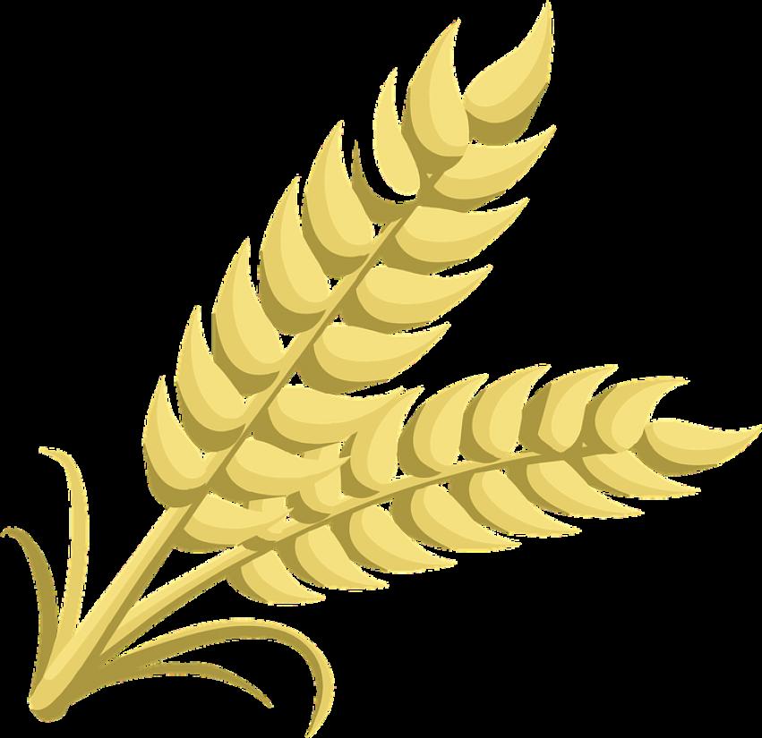 Oatmeal clipart grain. Guru kirpa atta flavour