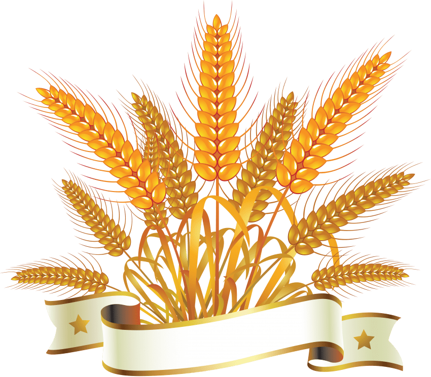 Png free images toppng. Grains clipart wheat grass