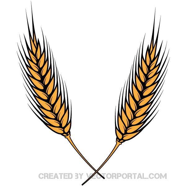 Grain free download best. Grains clipart wheat leaves