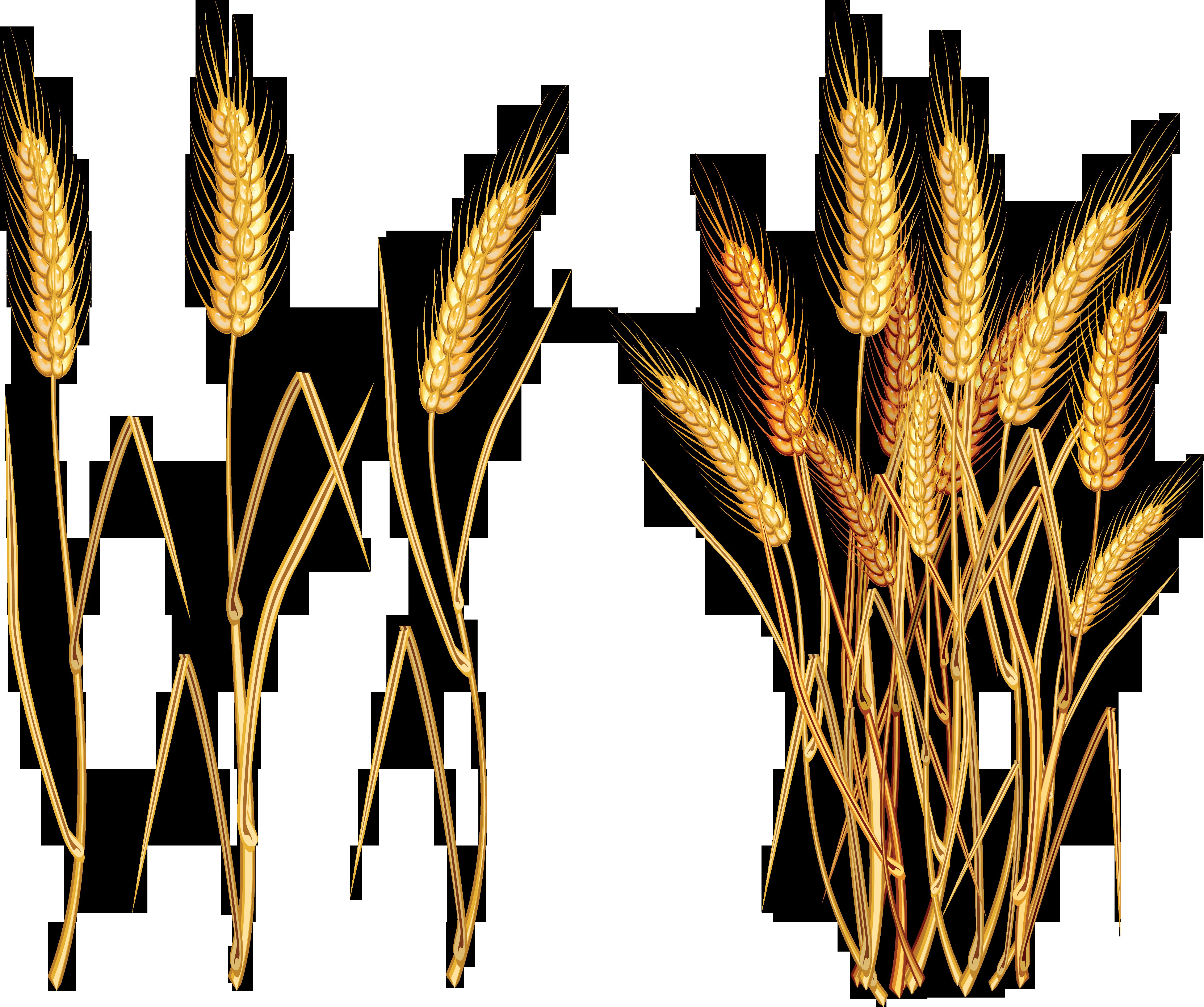 Png tats pinterest. Grains clipart wheat stalk