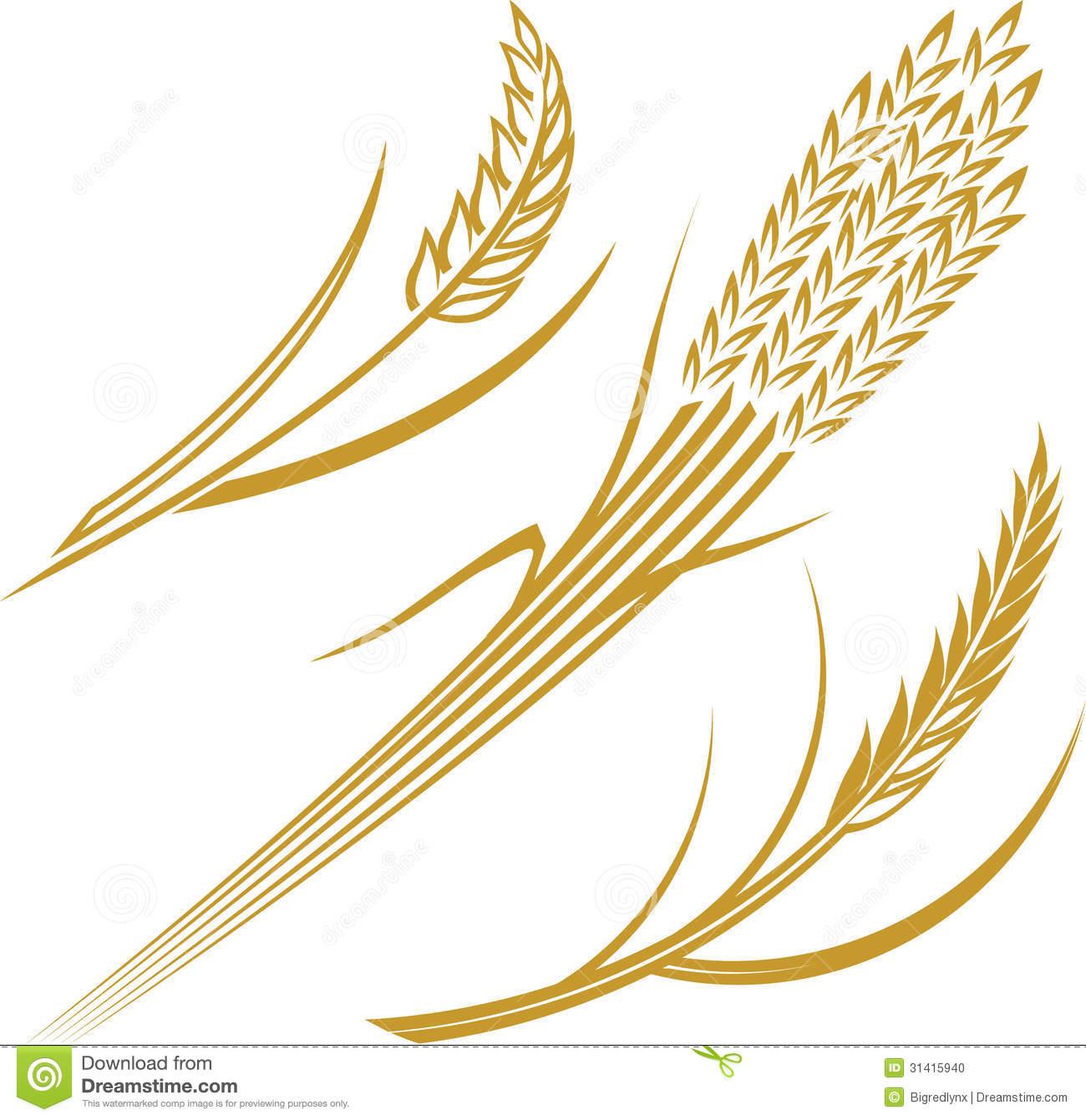 Grains clipart wheat stalk.  clipartlook