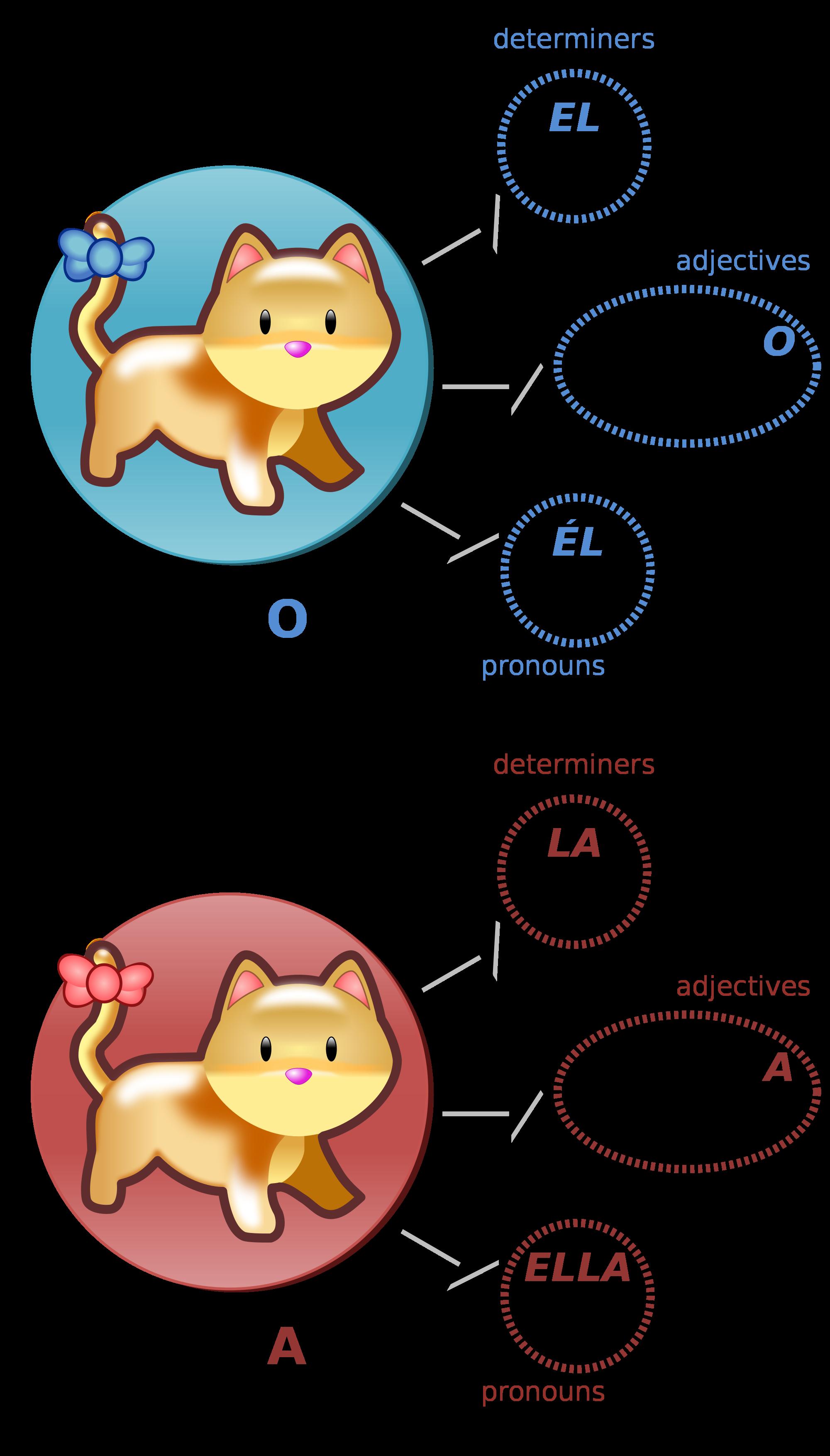 Grammar clipart illustration. File gato vs gata
