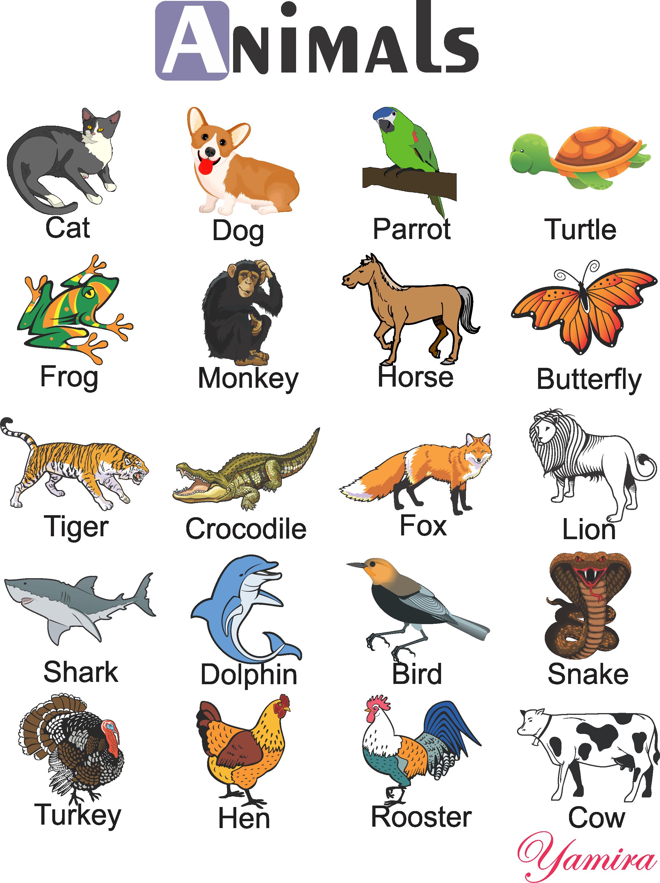 Grammar clipart part speech. Animals infograf as english