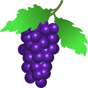 Grapevine panda free images. Grape clipart