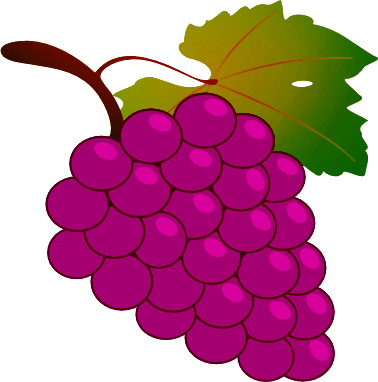 Shikha s hindi class. Grape clipart angoor