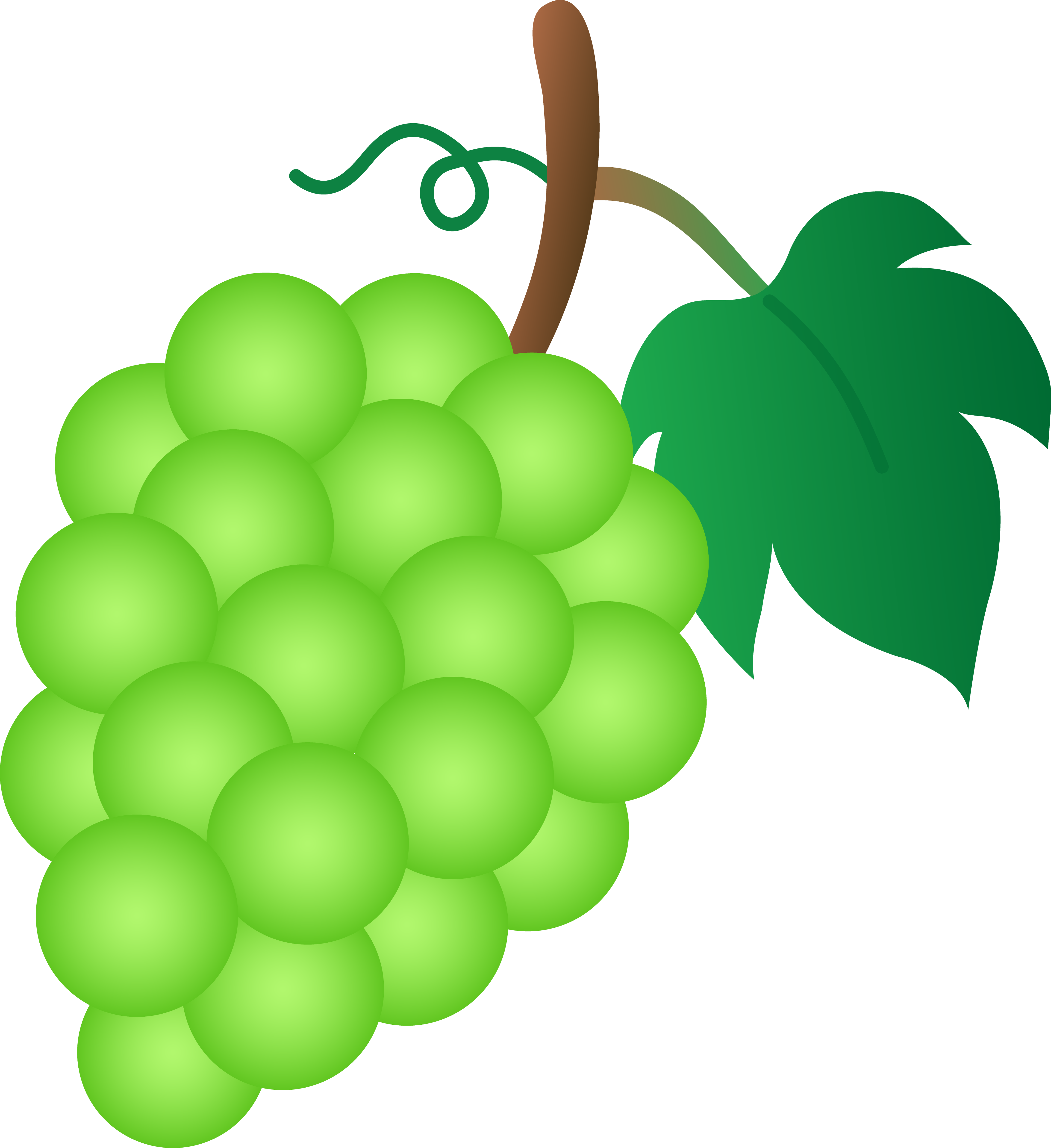 collection of green. Grapes clipart cartoon
