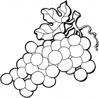 Grape clipart black and white. Free grapes download clip