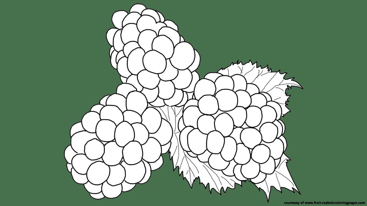 grapevine clipart blackberry vine
