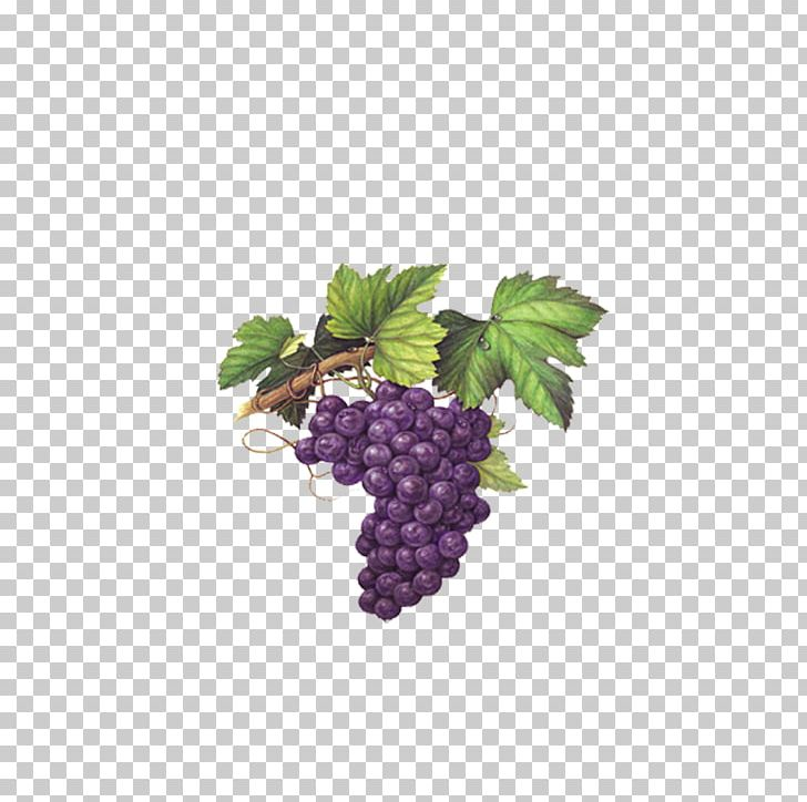 Red wine muscat chardonnay. Grapevine clipart blackberry vine