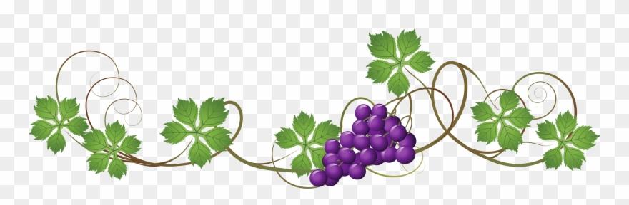 Grape clipart clear background. Vine transparent