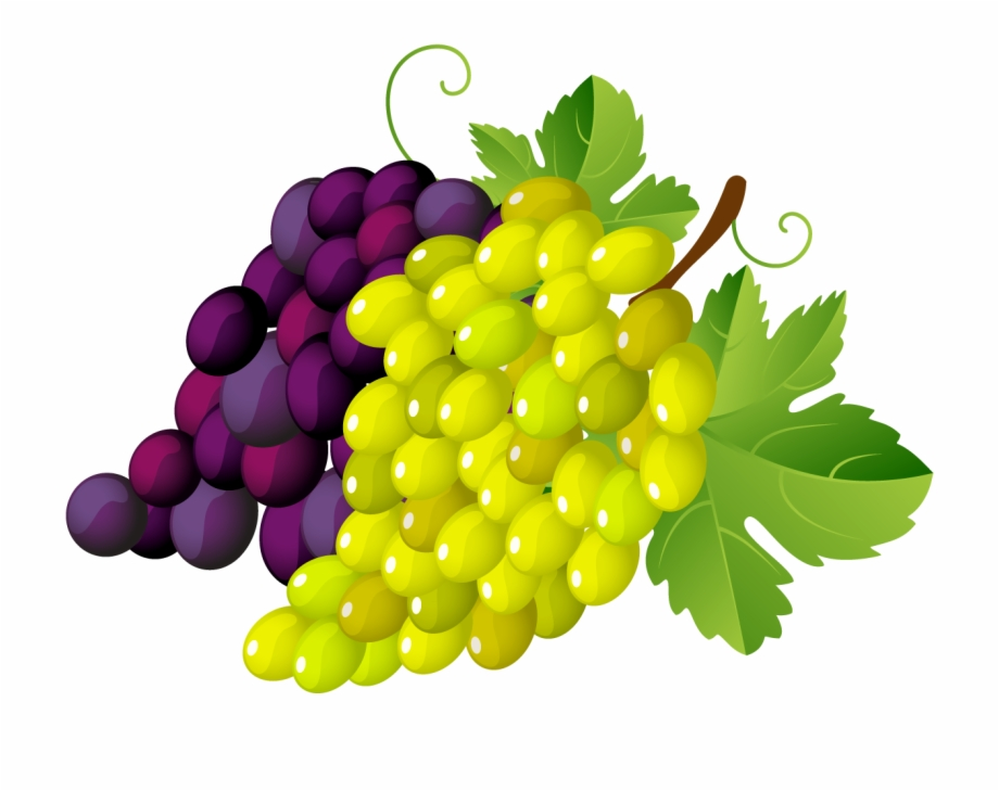 Grape clipart clear background. Download png image report