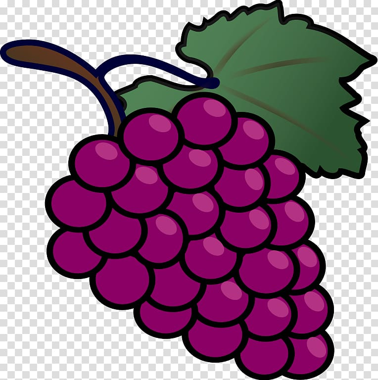 Common vine drawing transparent. Grape clipart clear background