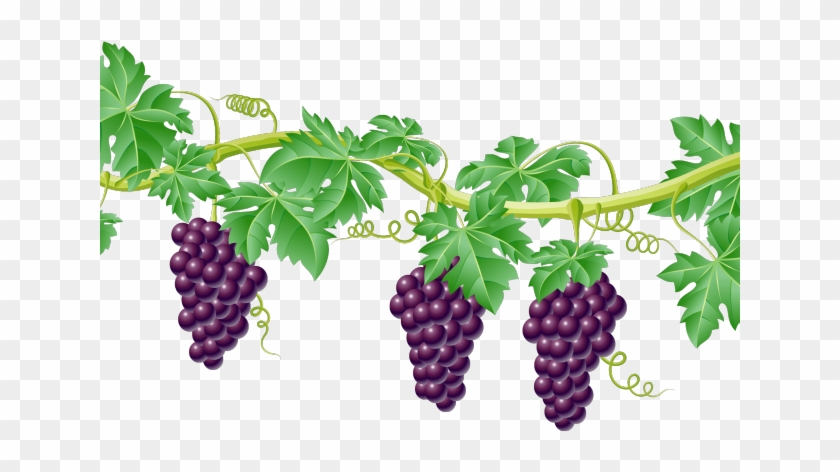Grapevine divider transparent . Grape clipart clear background