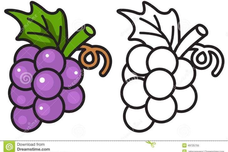 Grape clipart coloring. Page x de colorat