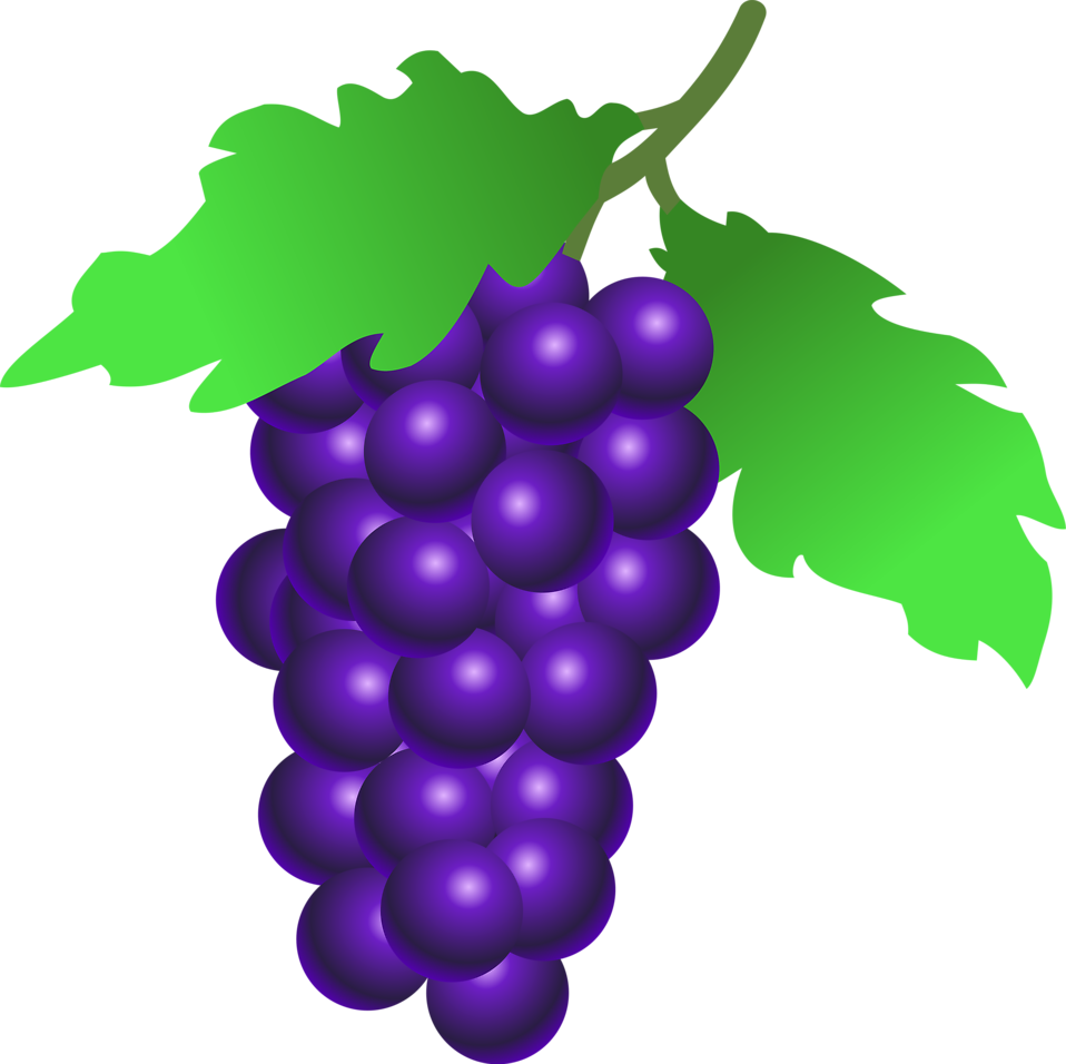 Free stock photo of. Grapes clipart illustration