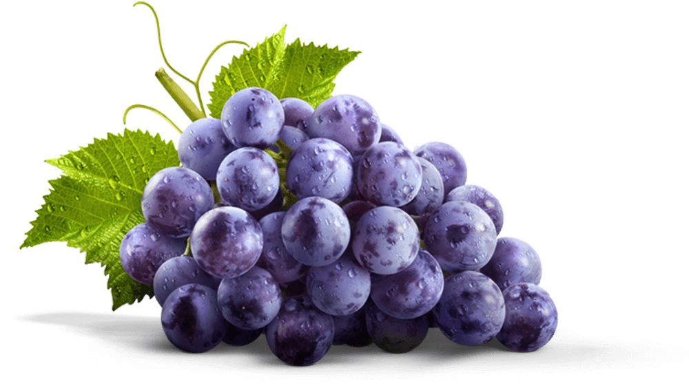 Grape clipart concord grape. Our story welch s