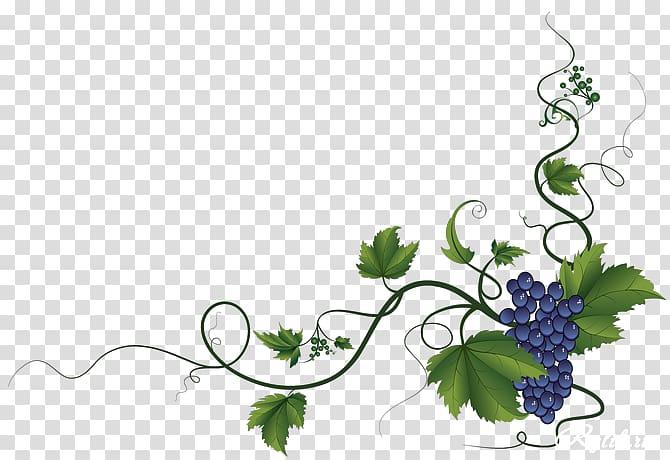 Grape clipart corner. Common vine wine leaves