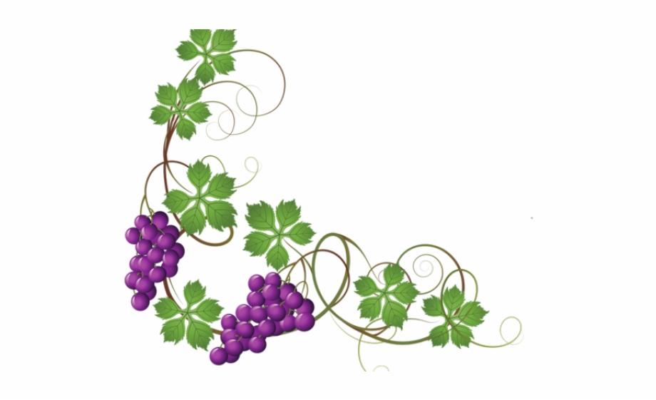 Grapes transparent background on. Grape clipart corner