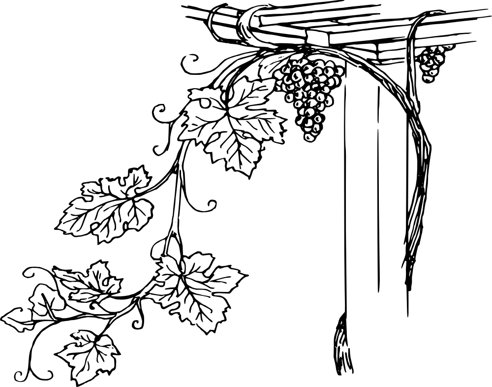 Onlinelabels clip art grapevine. Grape clipart drawing