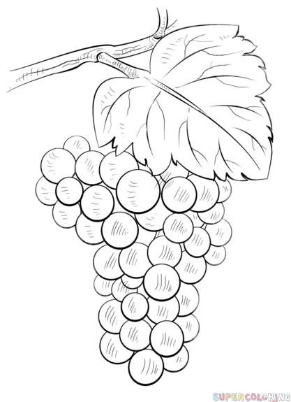 Grape clipart easy draw. How to grapes step
