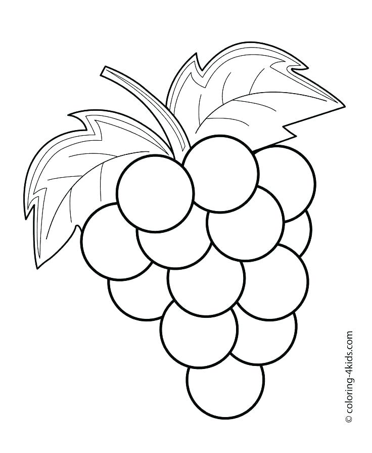 Grape clipart easy draw. Fruits to elohimsdaughter co