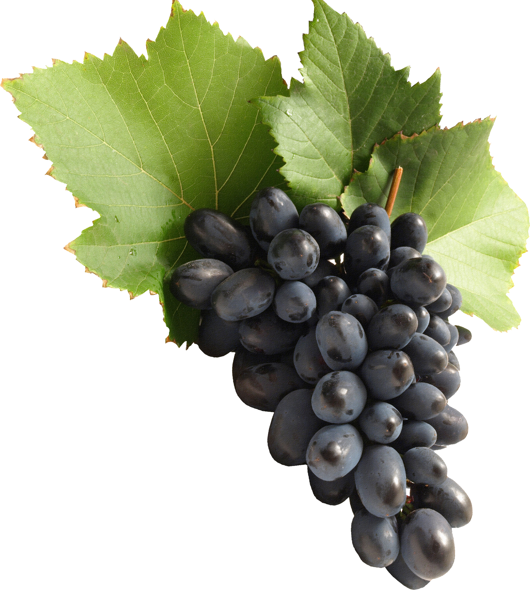 Fifty isolated stock photo. Grapes clipart bowl grape