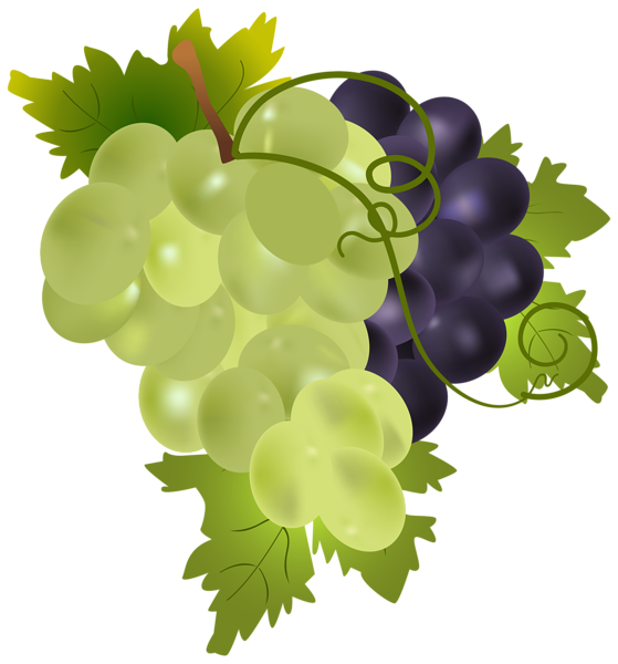 Free to use clip. Grapes clipart cartoon