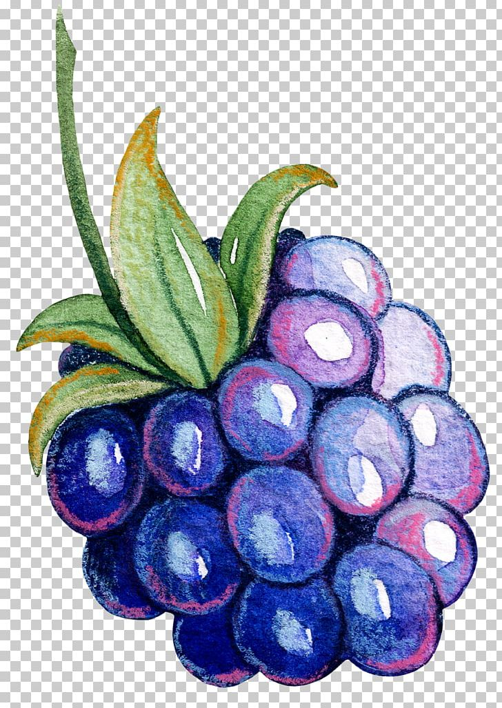 Grape clipart fruit vegetable. Auglis png berry bilberry