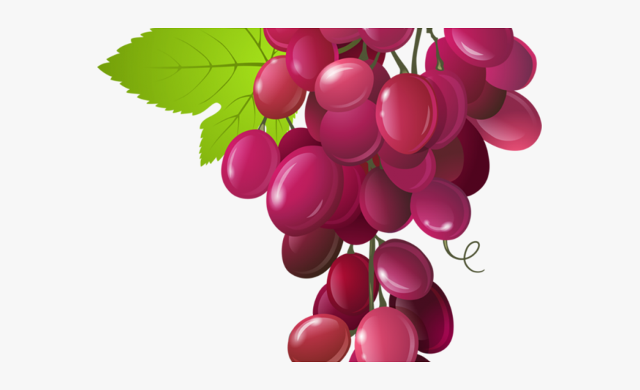 Grapes cliparts cartoons . Grape clipart fruit vegetable