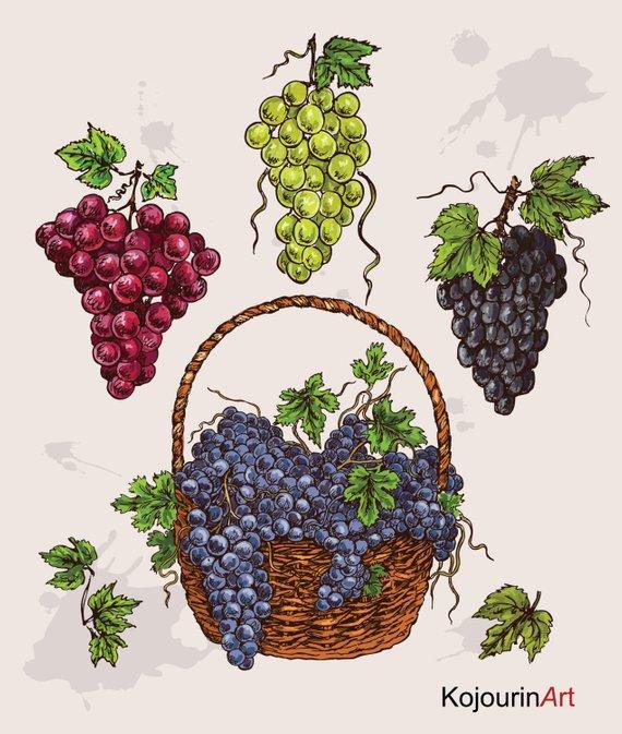 Grape clipart grap. Digital fruit basket purple
