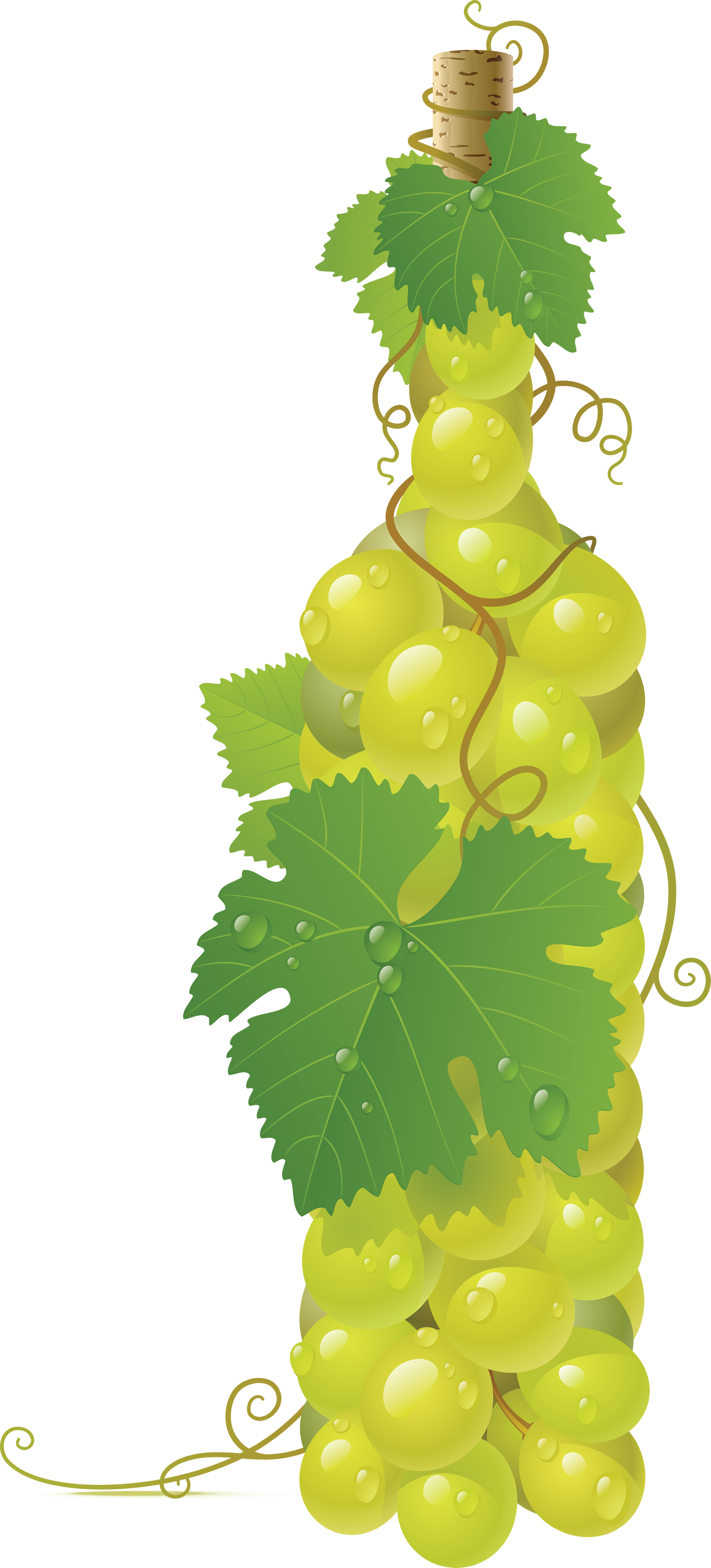 Png image free picture. Grapes clipart wine grape