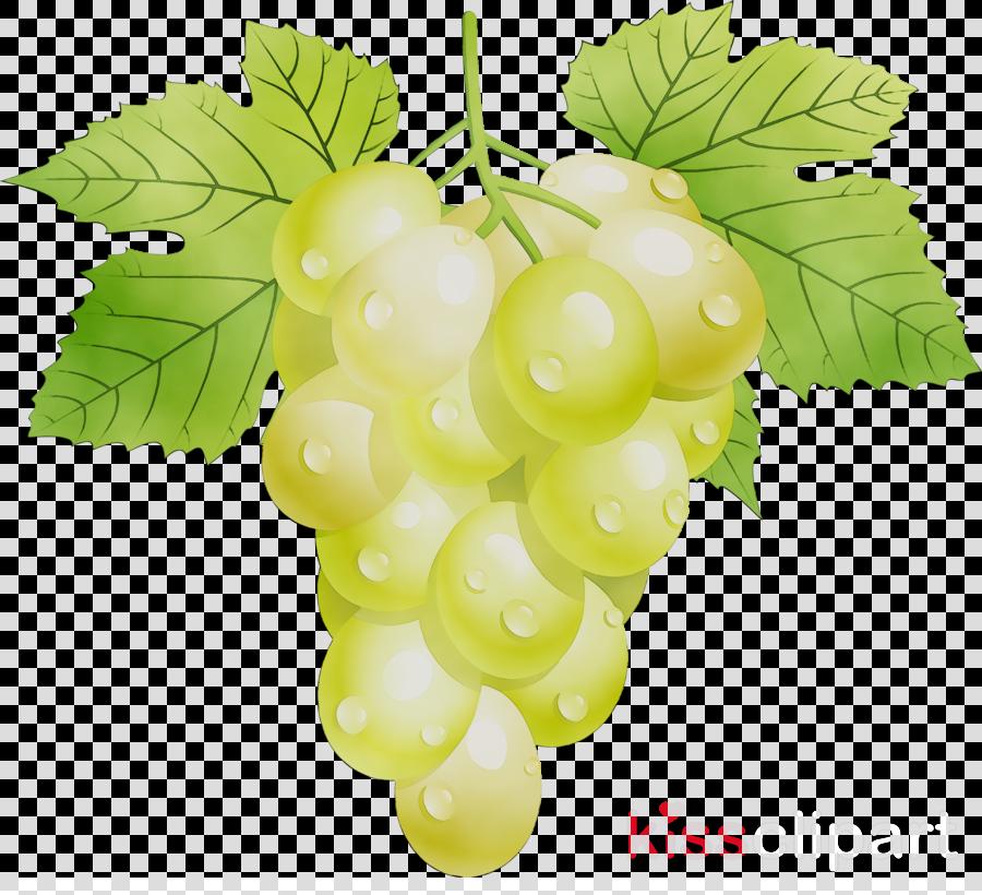 Leaves background fruit plant. Grape clipart grap