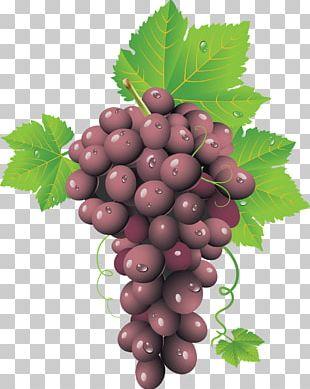 Common png images free. Grape clipart grap