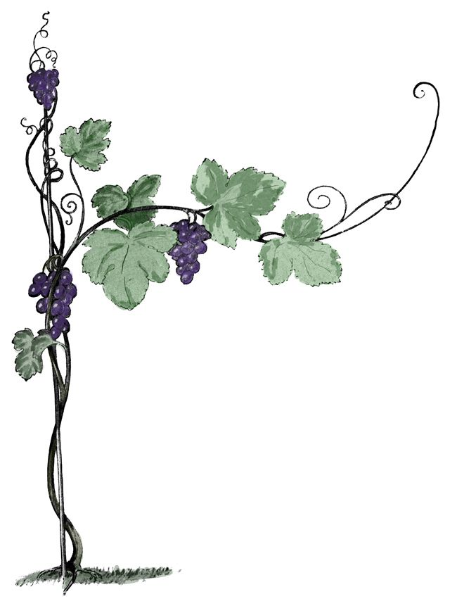 Grape clipart grape plant. Vines grapes grapevines vine