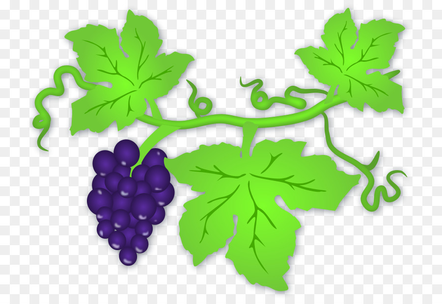 Family tree background wine. Grape clipart grape plant