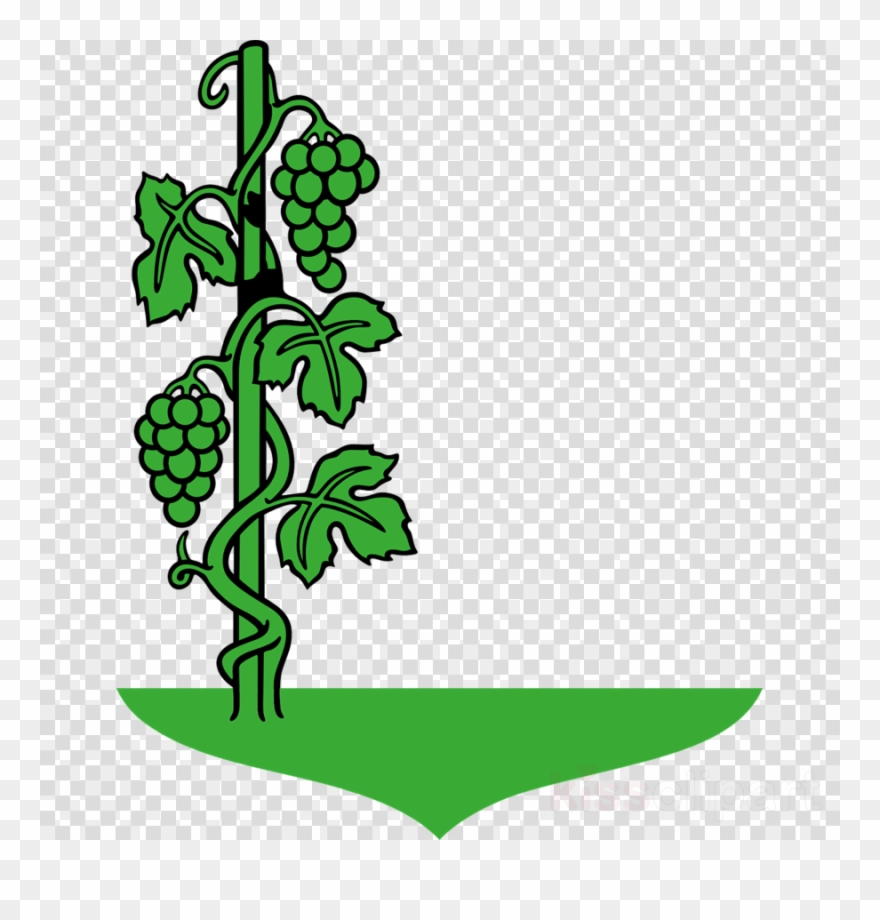 Grape clipart grape plant. Cartoon vine common clip