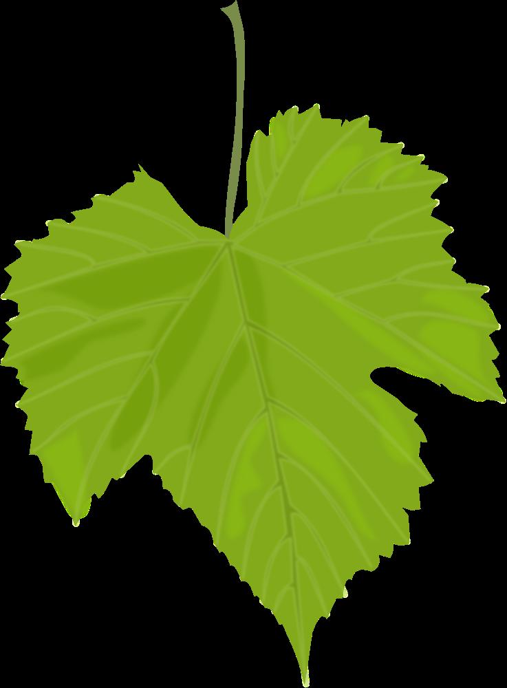 Grape grape tree