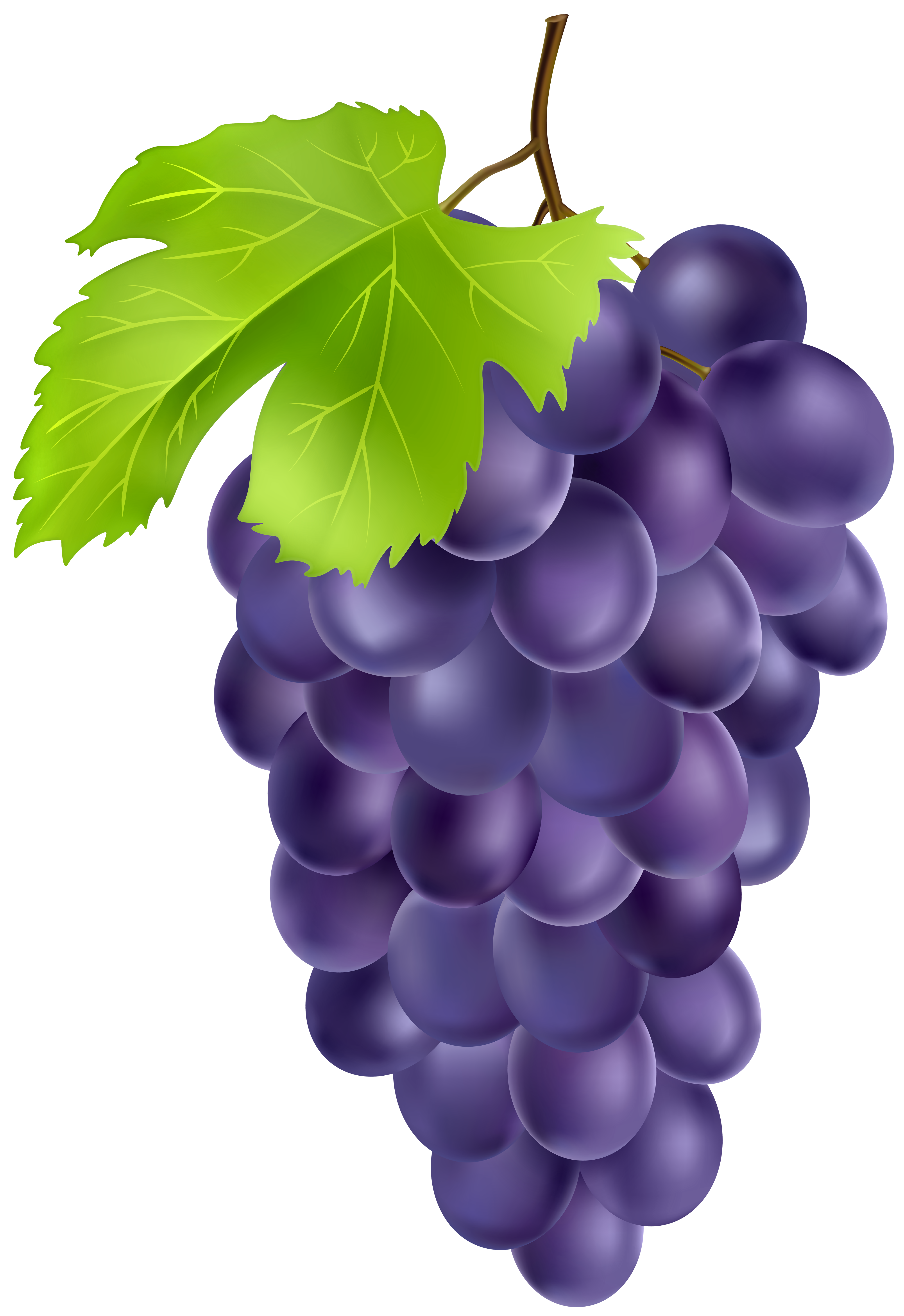 Grape clipart high quality. Black grapes png gallery