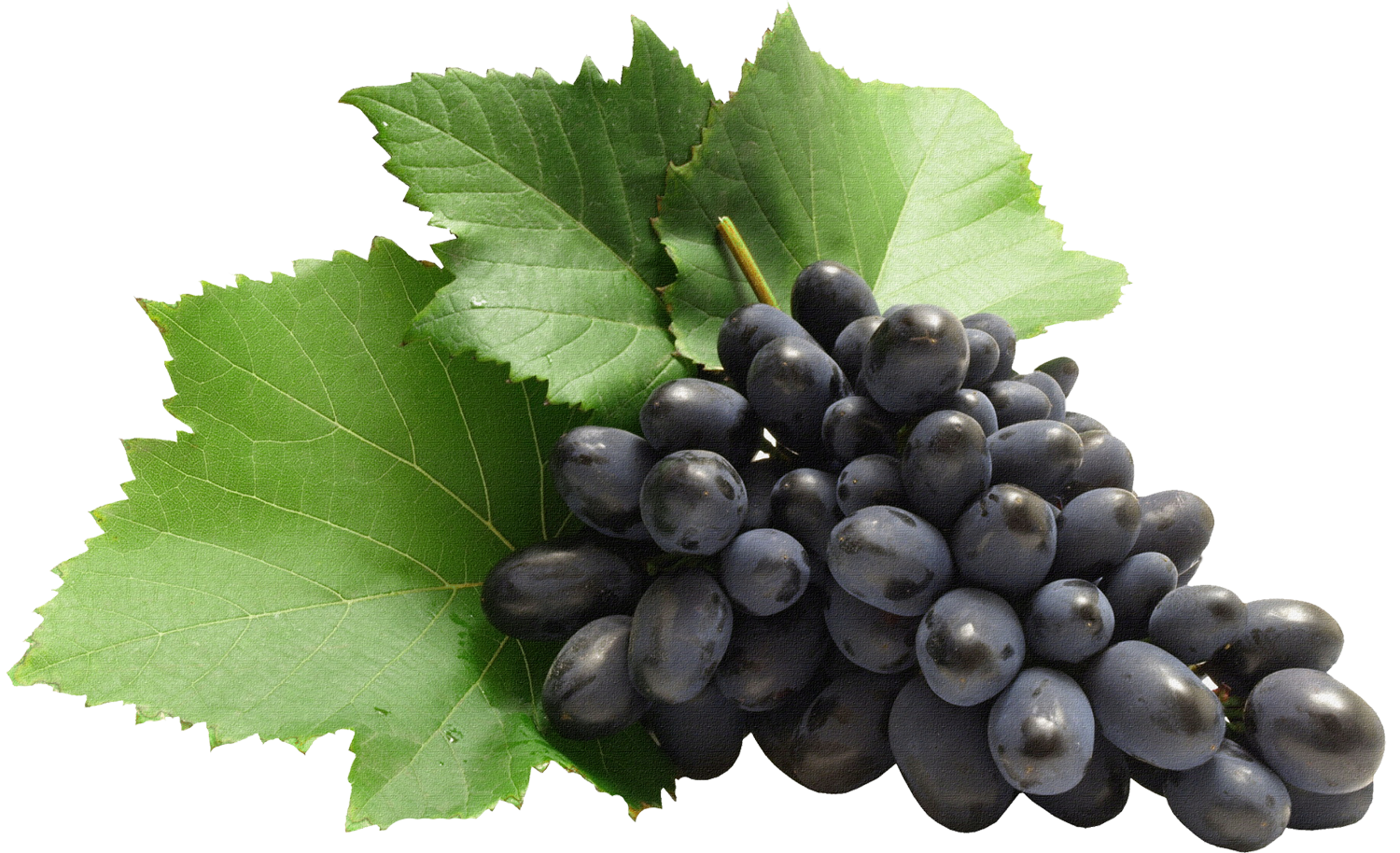 Grape clipart high quality. Large grapes png gallery