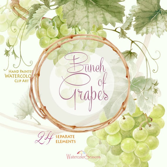 Watercolor handpainted bunch of. Grape clipart high quality