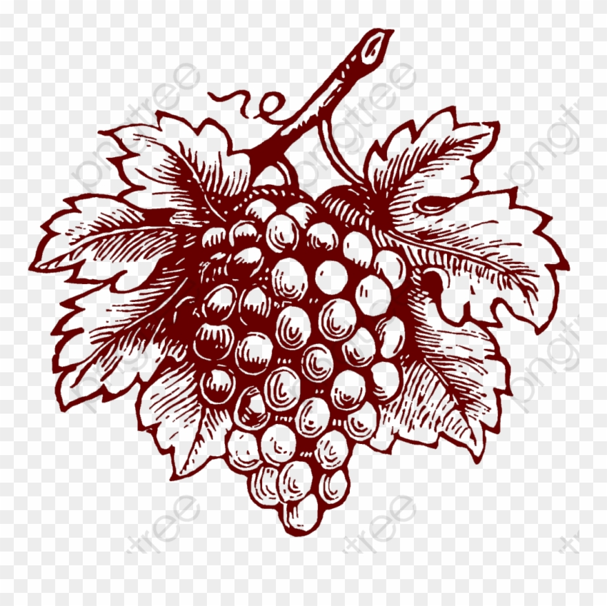 Realistic png download . Grapes clipart illustration