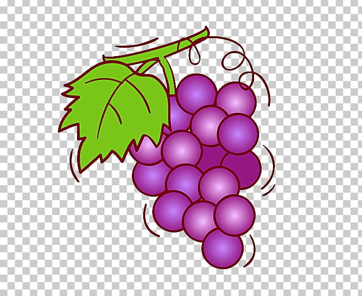 Wine fruit png chilled. Grape clipart illustration