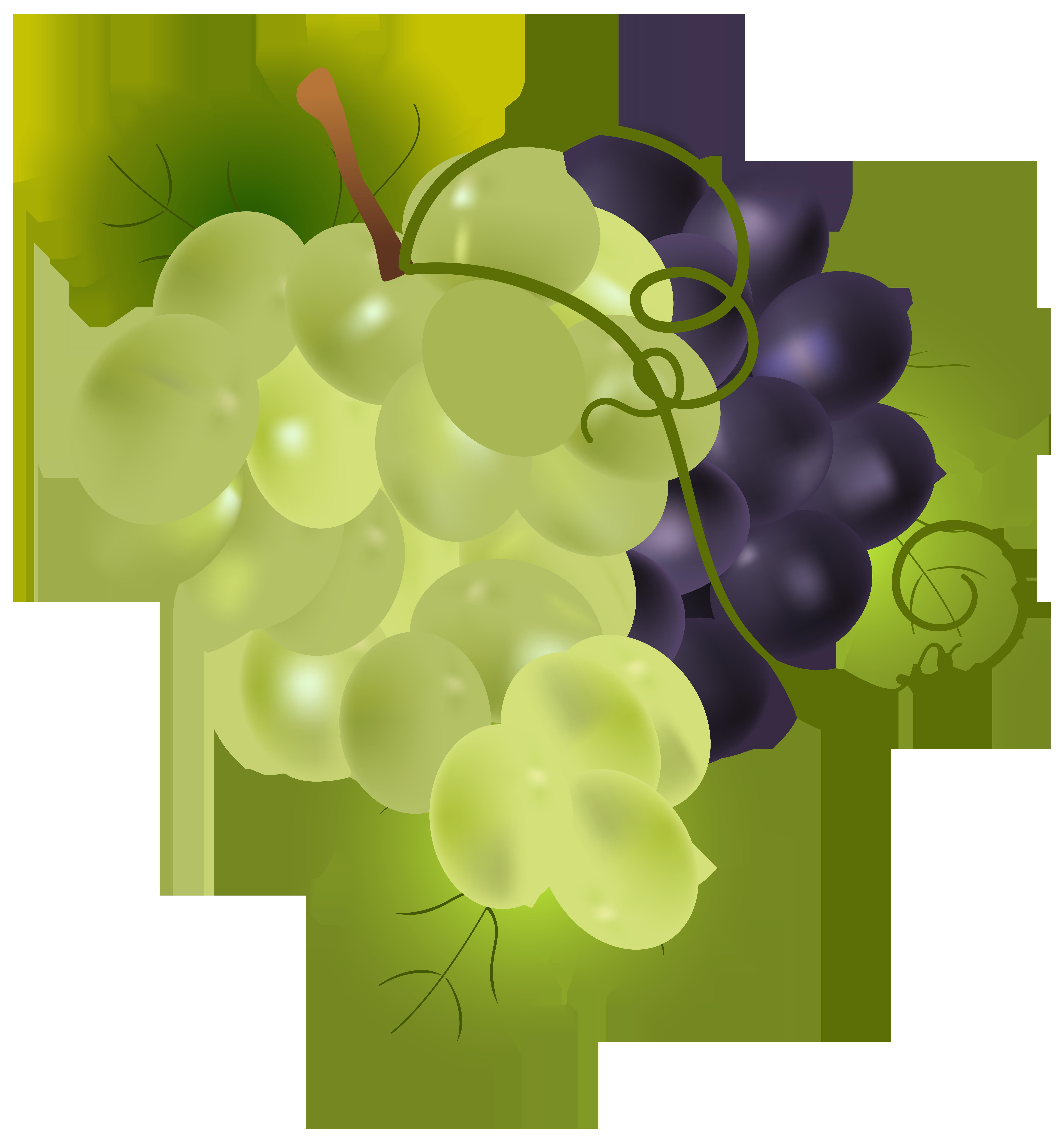 Grapes clipart illustration. Png clip art image