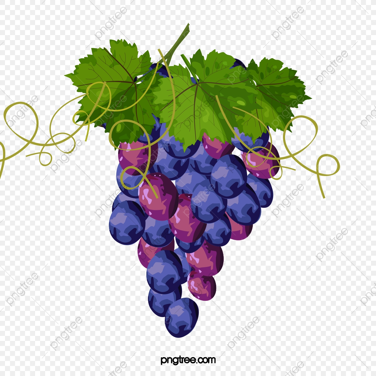 Hand watercolor grape png. Grapes clipart painted