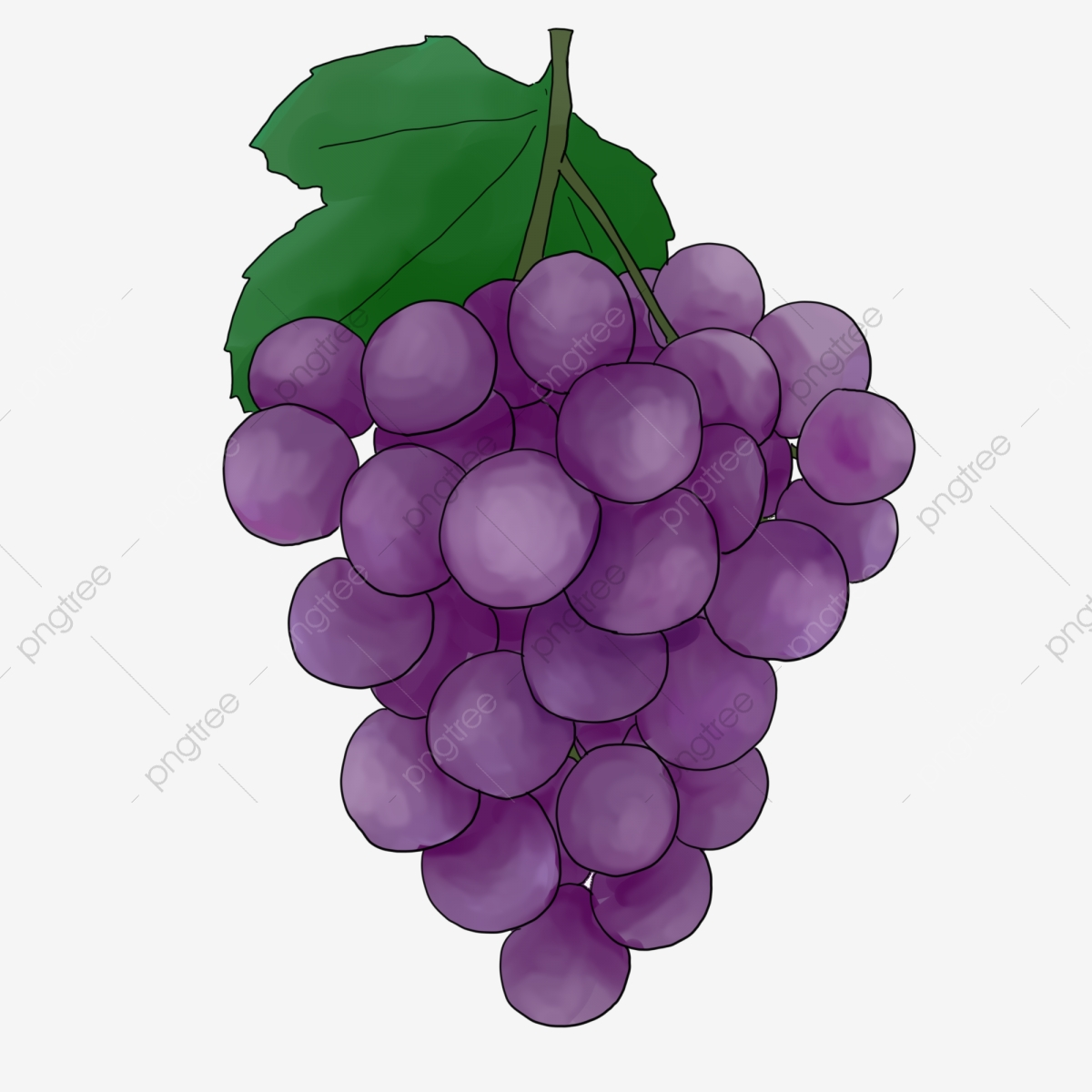 Grapes clipart painted. Hand fruit grape illustration