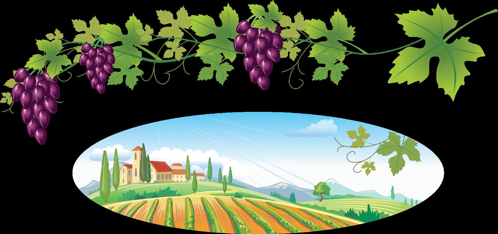 Forgetmenot fruits grapes. Grape clipart plum fruit