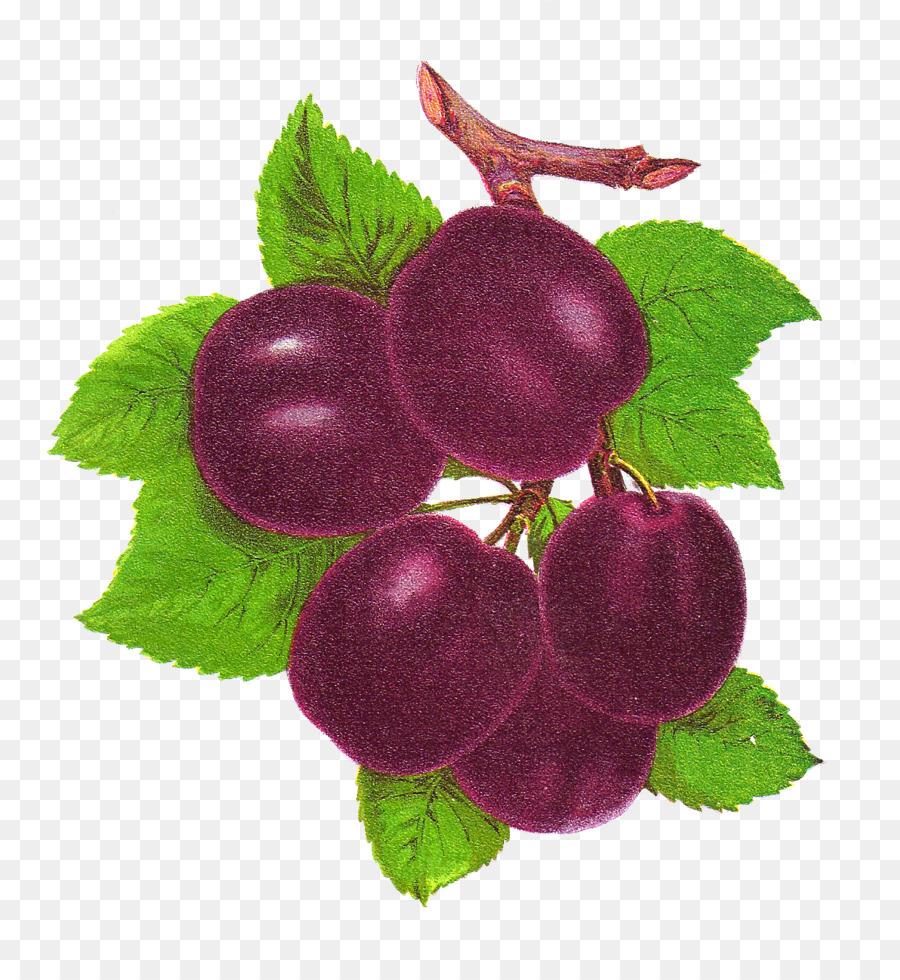 Drawing of family transparent. Grape clipart plum fruit