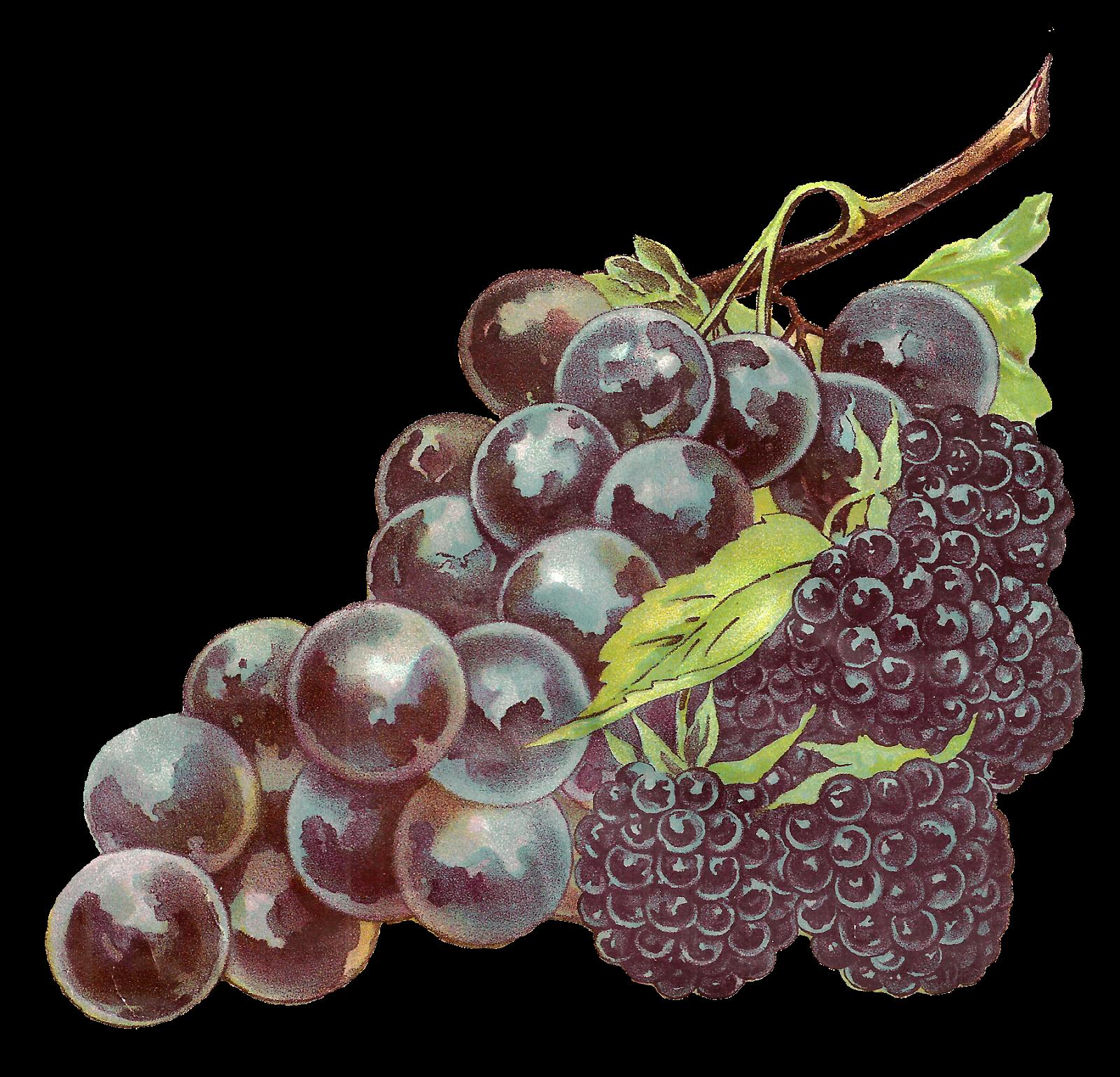 Grape clipart printable. Antique images stock fruit