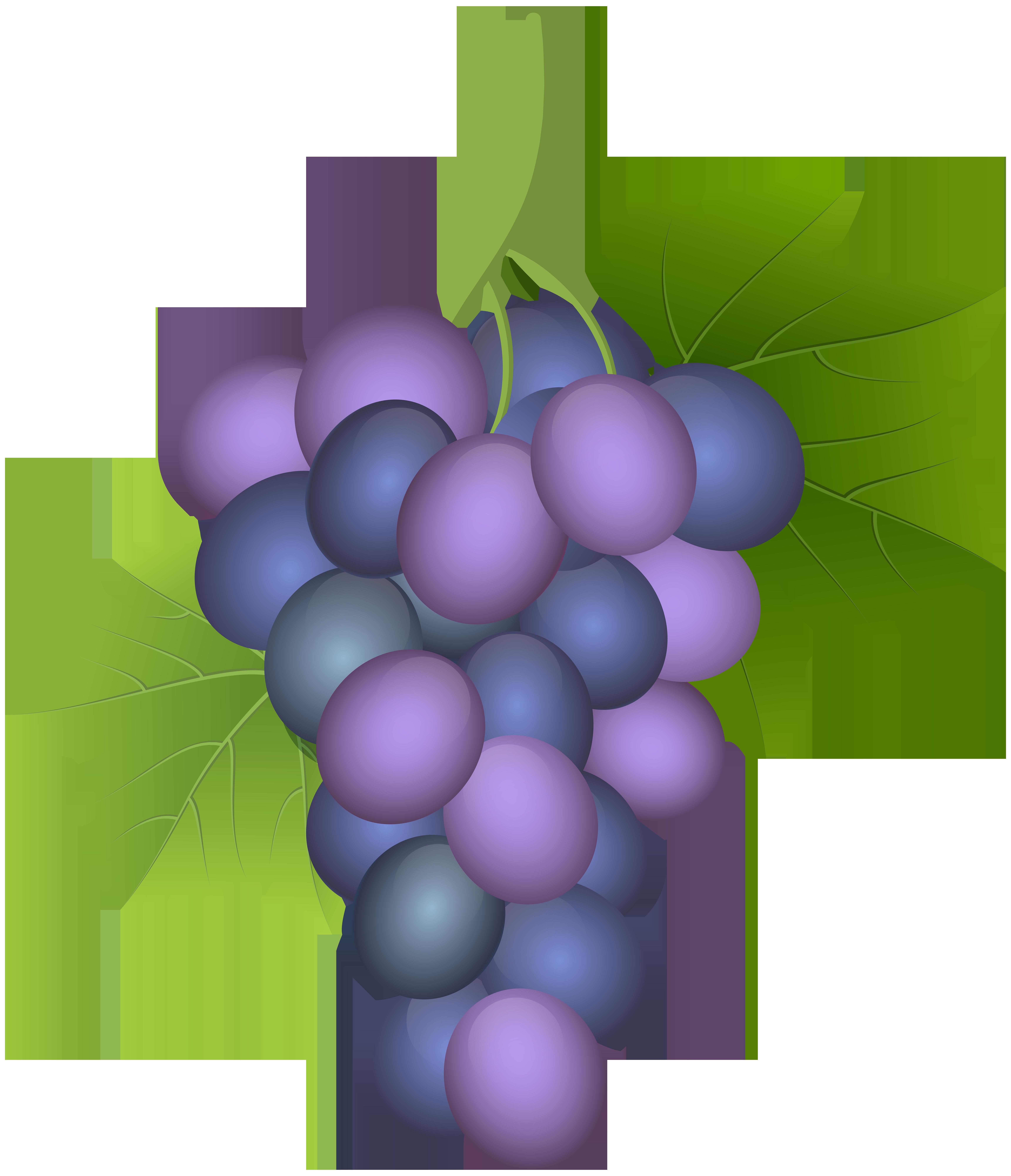 Grape clipart pruple. Purple png clip art