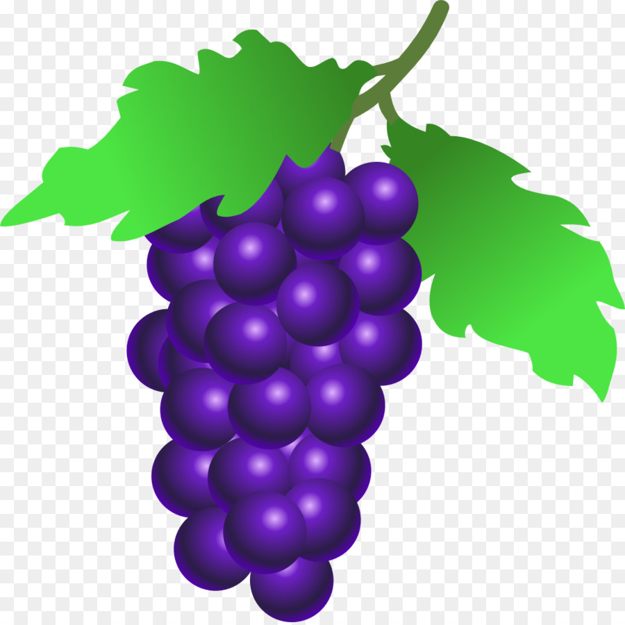 Family drawing . Grapes clipart purple berry